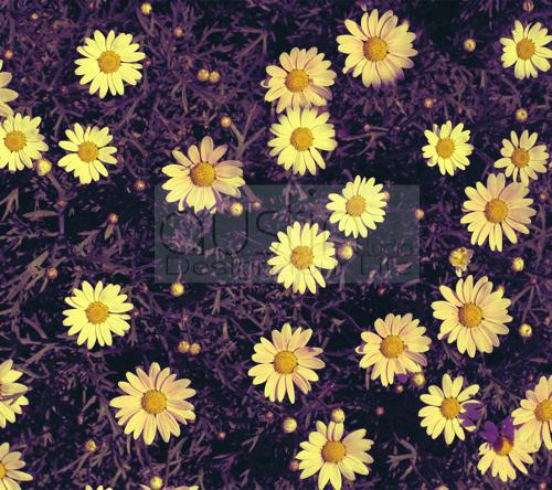daisy - 2160x1920sample