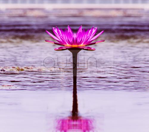 floating flower - 2160x1920sample