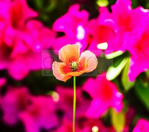 flower - 2160x1920 (3)sample